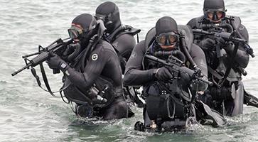 Seals im Wasser